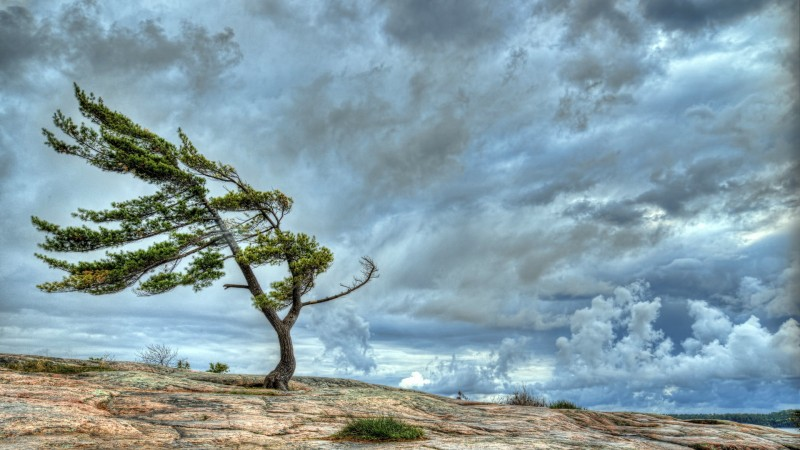 Tree blowing in the wind